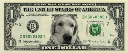 Money_usd1_08081481091_final