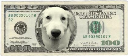 Money_us_dollar_100_2_08003799861_f